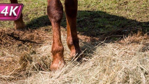 Thumbnail for Horse Hoof Beats