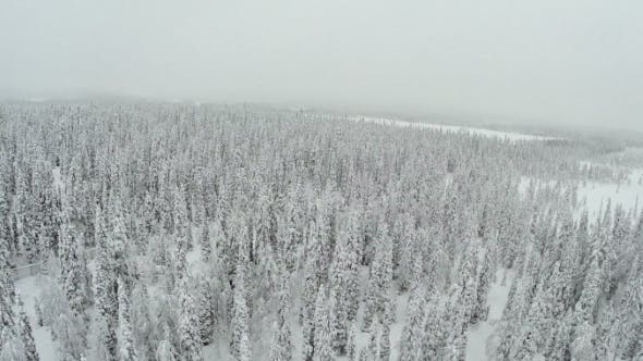 Thumbnail for Winter Forest With Frosty Trees From Air