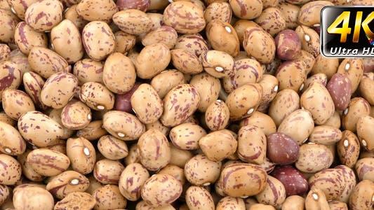 Thumbnail for Kidney Bean 2