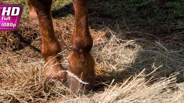 Thumbnail for Impatient Horse