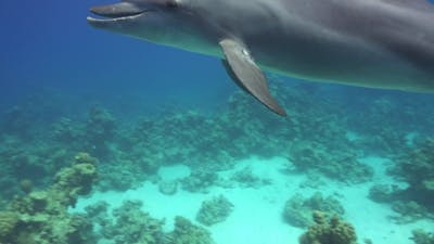 Dolphins Swims Near Divers