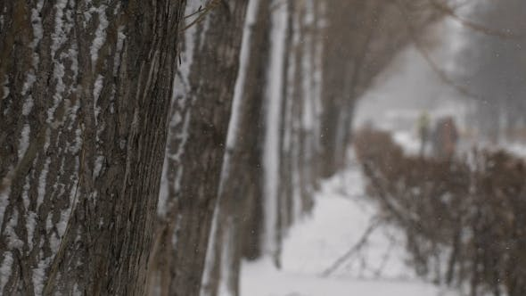 Thumbnail for Winter Walkway. Snowfall In The City, a Pedestrian Walkway With Trees