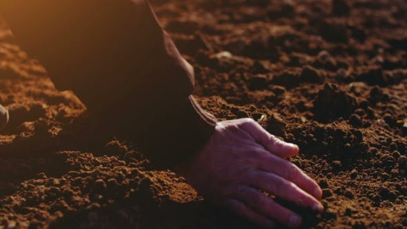 Thumbnail for Farmer Examining Soil. Agriculture Background.