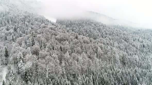 Thumbnail for Flight Above Ukraine Winter Forest, Aerial Top View.