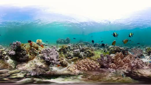 Thumbnail for Coral Reef with Fish Underwater 360VR. Camiguin, Philippines
