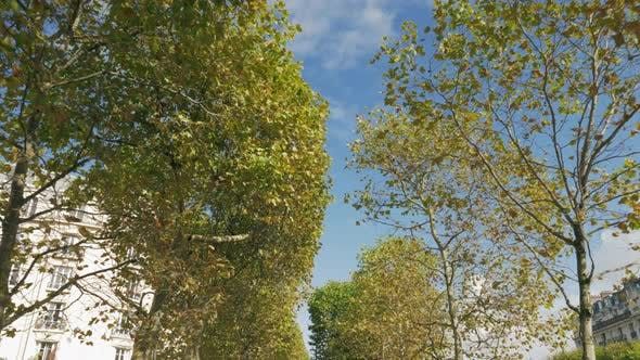 Thumbnail for Walking Along the Avenue of Trees on Autumn Day. Paris, France