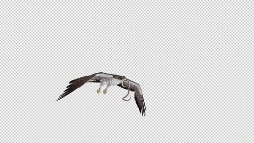 Snake Eagle with Serpent - Flying Loop - Side Angle