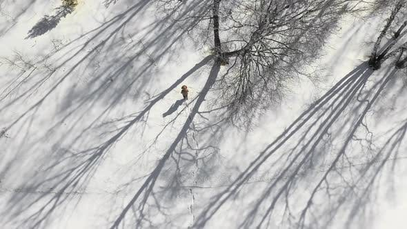 Cover Image for Aerial View of a Human Walks Through the Winter Forest