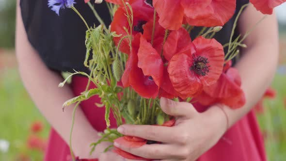 Thumbnail for Close-up View of Female Hands in a Poppy Field Holding Bouquet of Flowers. Connection with Nature