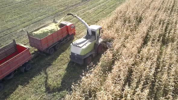 Thumbnail for Aerial Forage Harvester Fills Truck with Cut Corn Mass