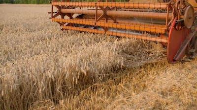 Harvesting. Combine Harvester Harvesting Wheat