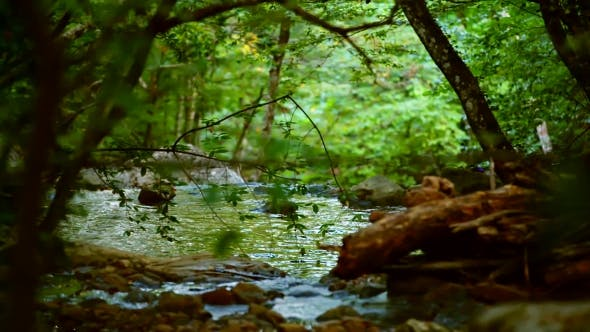Thumbnail for Calm River Flowing Deep In The Forest