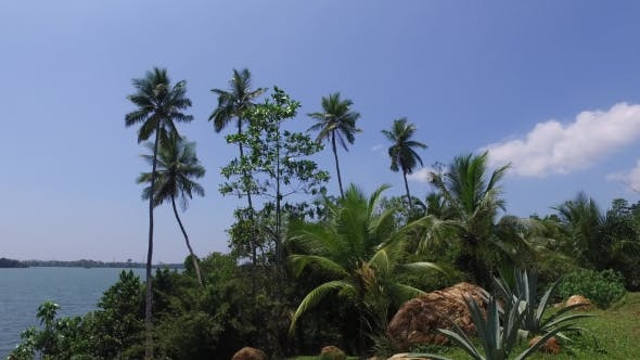 Thumbnail for View To Ocean From Sri Lanka Island With Palms 99