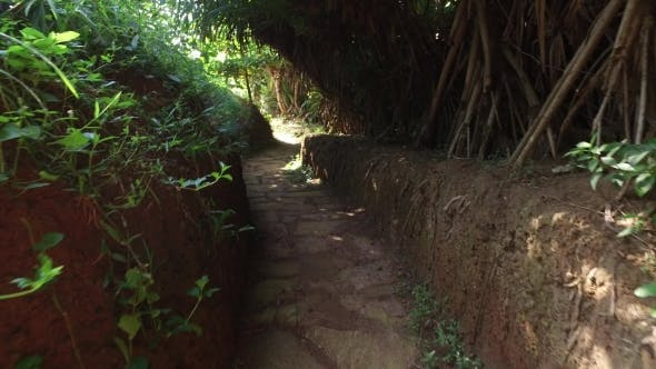 Thumbnail for Road Or Path Through Sri Lanka Forest 90