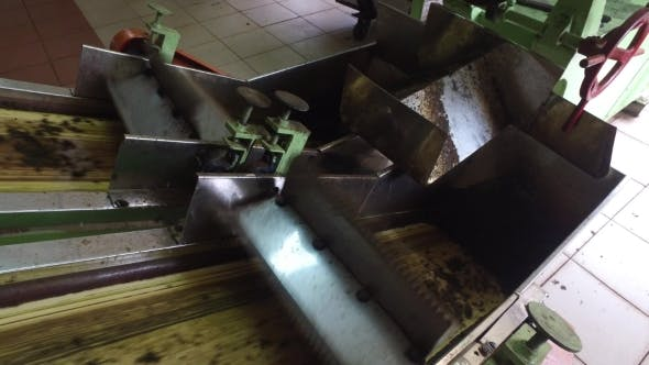 Thumbnail for Green Tea Moving On Machine Conveyor At Factory 50