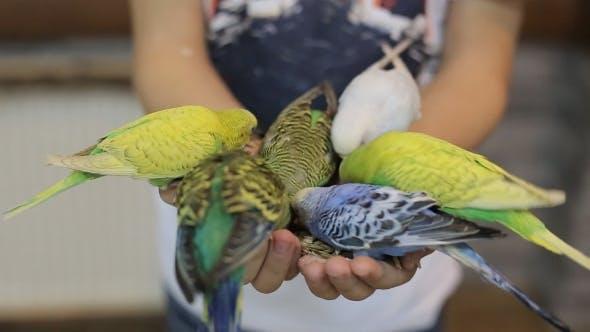 Cover Image for le garçon nourrit les perroquets sur son bras