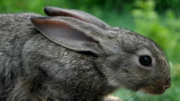 Thumbnail for Rabbit. Beautiful Animal Of Wild Nature