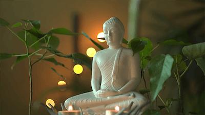 Buddha and the Boa Tree