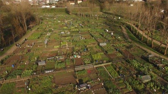 Thumbnail for Organic Vegetable Garden Pack