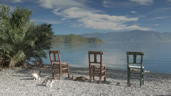 Thumbnail for Wooden Chairs And Lonely Palm Tree. Panoramic View Of a Lake.