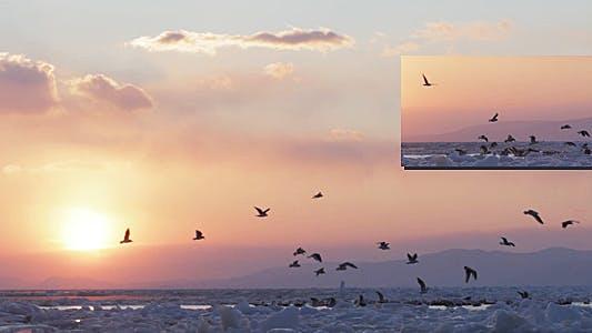Thumbnail for Frozen Sea Gulls 2 (Sunset)