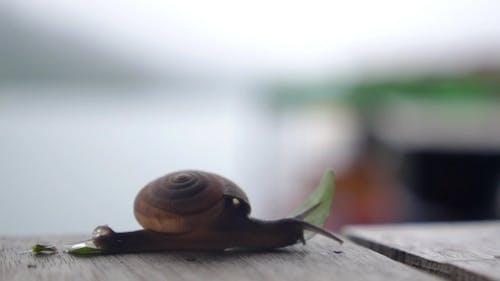 Creeping Snail. .