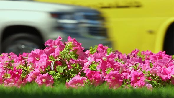Thumbnail for Spring Flowers in the City