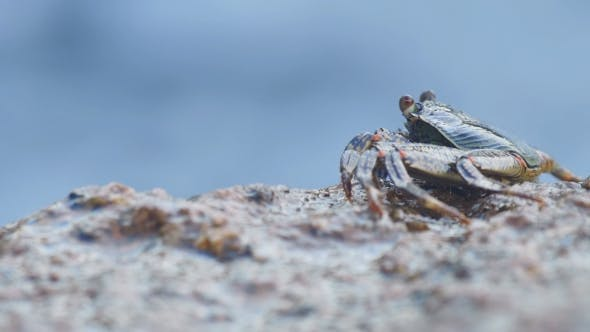 Thumbnail for Crab On The Rock At The Beach,