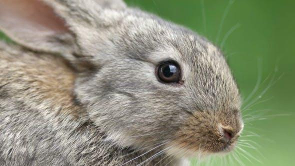 Rabbit Beautiful Animal Of Wild Nature Von Artfotodima Auf Envato
