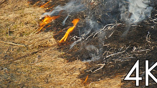 Burning Grass Steppe