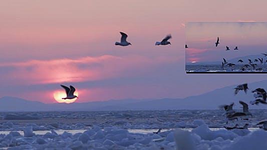 Thumbnail for Frozen Sea Gulls 3 (Sunset)