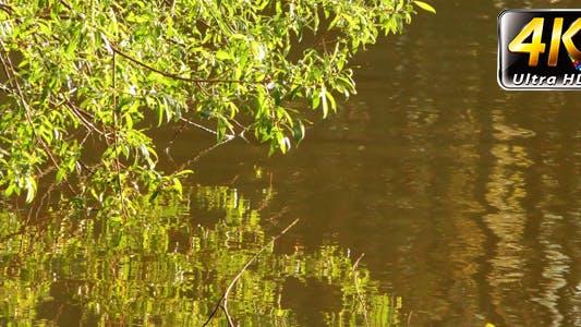 Thumbnail for Green Lake and Plant Reflection 2