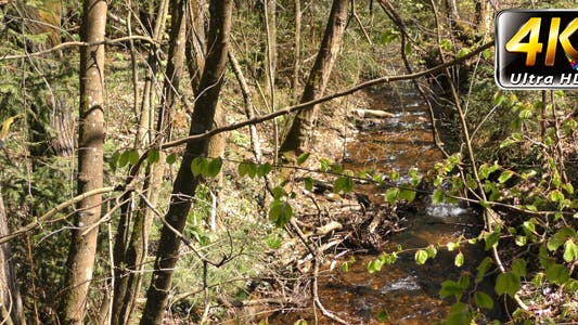 Thumbnail for Creek in Forest Nature 1