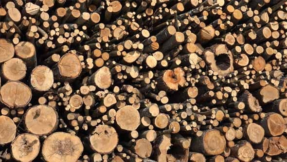 Thumbnail for Lumber, Timber or Firewood
