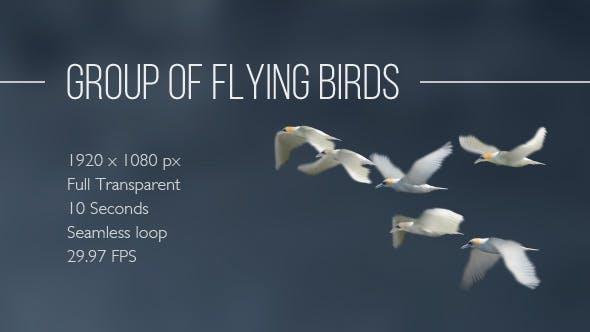 Thumbnail for Group Of Flying Birds