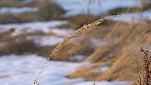 Cover Image for Rural Field with Snow Patches 2