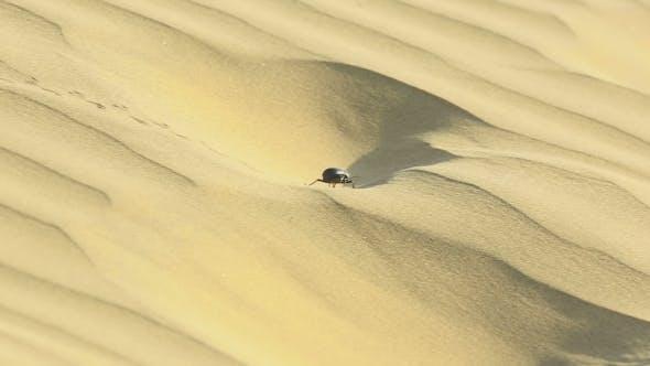 Thumbnail for Scarab Beetle In Desert
