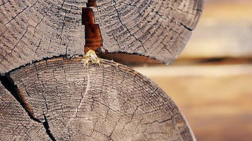 Closeup Slow Motion Bees Arrive in Turn Adheres To the Building Material Build a Nest Between the