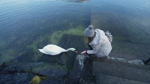 Cover Image for Woman feeding a swan at a lake