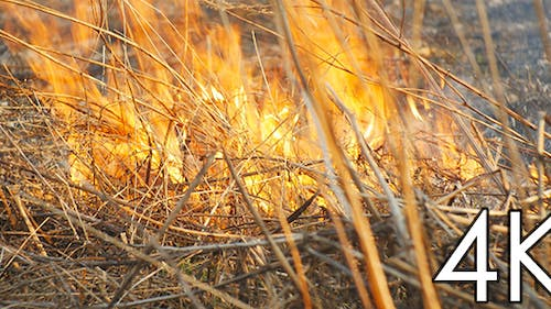 Spurts of Flame