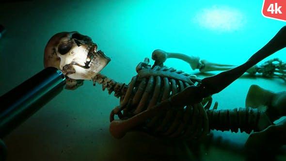 Human Skeleton 272