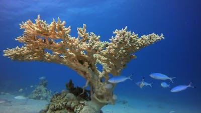 Coral Garden Hard Corals