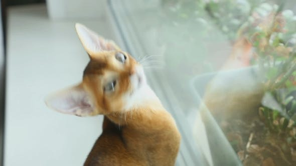 Thumbnail for Abissynian Kitten Hunts
