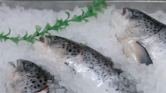 Thumbnail for Fish on the Counter in the Store