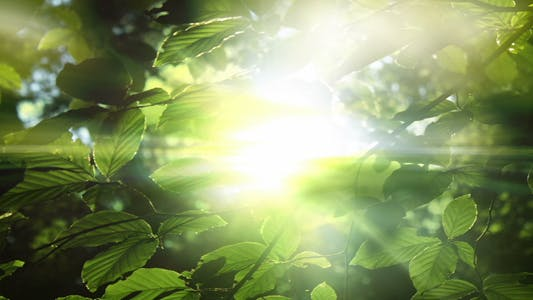Thumbnail for Green Leaves And Light Background