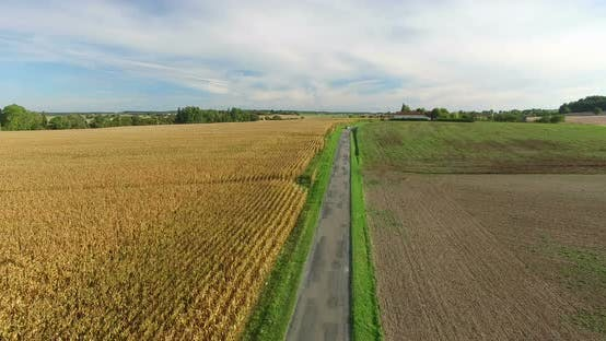 Thumbnail for Aerial View Of Yellow Rapeseed Field 15