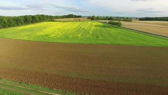 Thumbnail for Aerial View Of Yellow Rapeseed Field 5