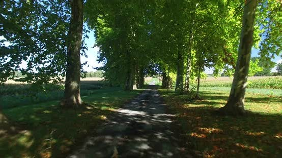 Thumbnail for Travelling Shot Through Tree Lined Driveway In France. 2