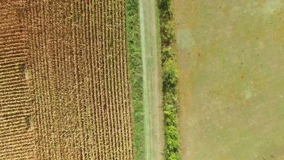 Thumbnail for Aerial View And Travelling Shot Through Lines Of Cornfield 9