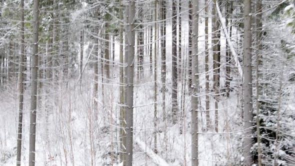 Mouche en bois d'hiver